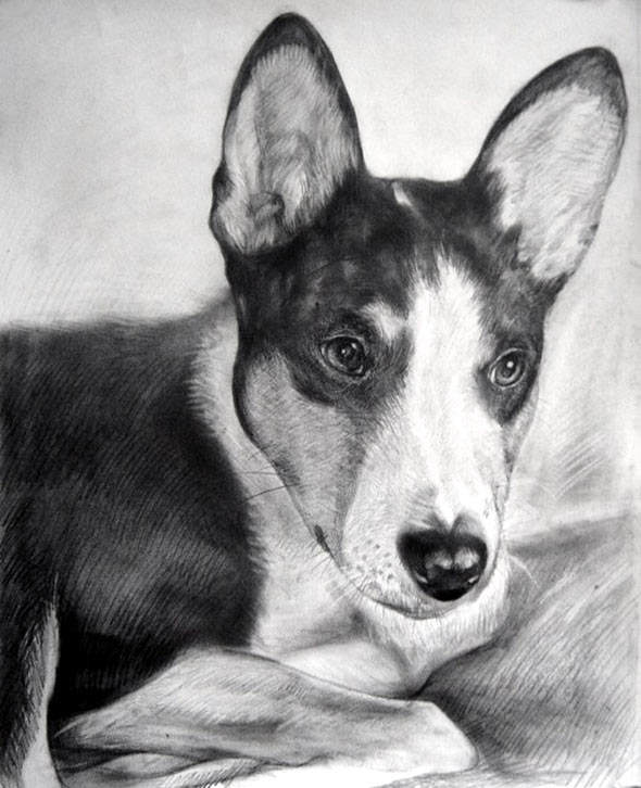 custom colored pencil drawing of a Toy Fox Terrier