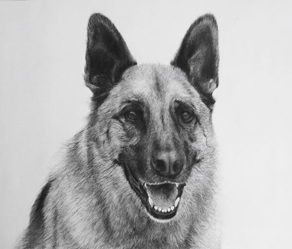dog custom charcoal drawing