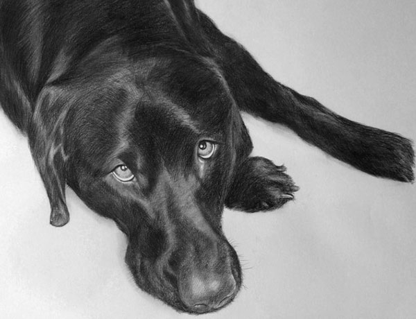 pet charcoal drawing