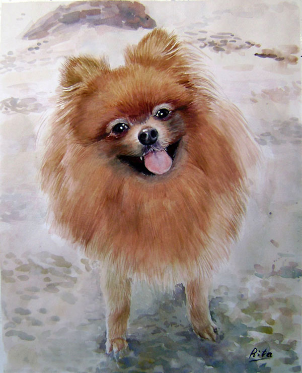 custom watercolor painting of brown pomeranian