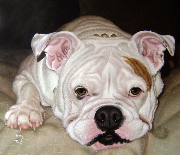 picture to oil painting of pet white Bulldog