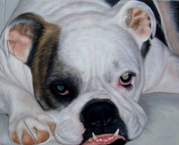 Custom oil painting of a laying bulldog