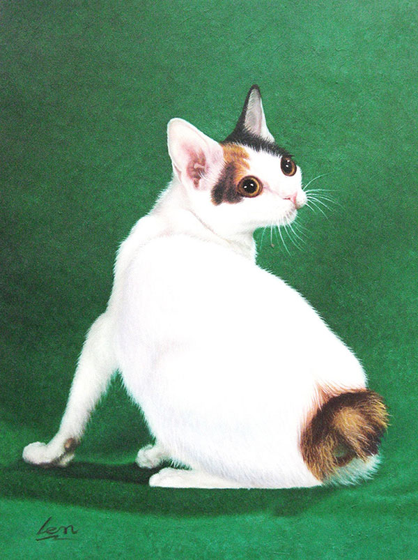 short tailed furry friend cat picture to painting