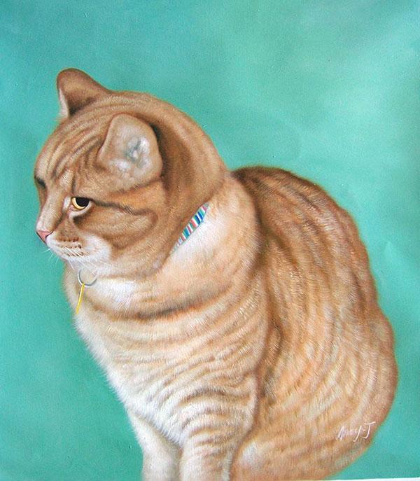 orange cat pet portrait