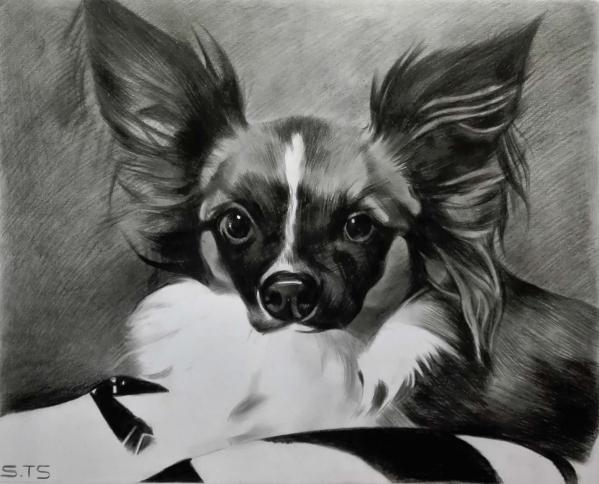 pet charcoal art