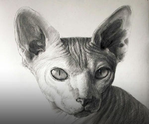 Cats In Charcoal
