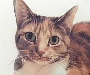 Cats In ColorPencil