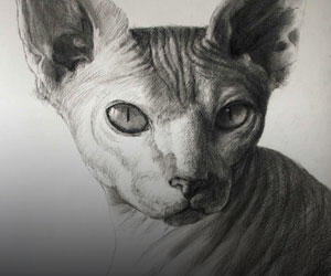 Pets in Charcoal