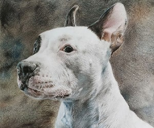 Pet Color Pencil Drawings