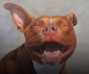 Dogs In Acrylic