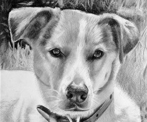 Dogs In Black Pencil