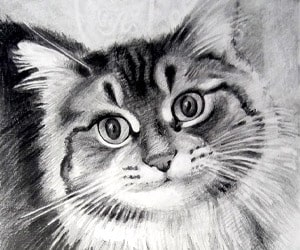 Pet Black Pencil Drawings